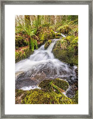 Autumn Stream Framed Print by Adrian Evans
