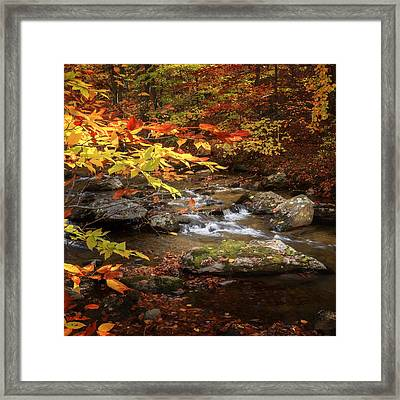Autumn Stream Square Framed Print by Bill Wakeley