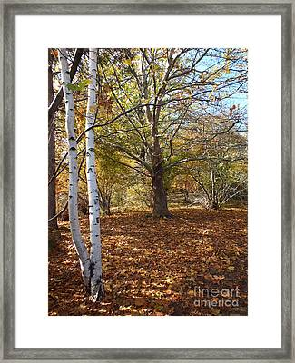 Autumn Stroll  Framed Print by Kimberly Maiden