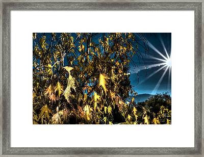 Framed Print featuring the photograph Autumn Sun by Kevin Bone