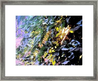 Autumn Sun On Leaves Framed Print