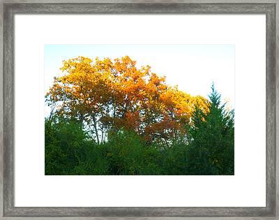 Autumn Sunlight Framed Print by Pete Trenholm