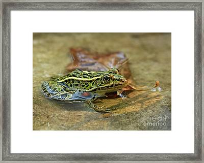 Autumn Sunset In The Frog Pond Framed Print by Inspired Nature Photography Fine Art Photography