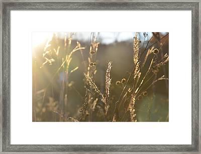 Autumn Sunshine Framed Print by Nikki McInnes