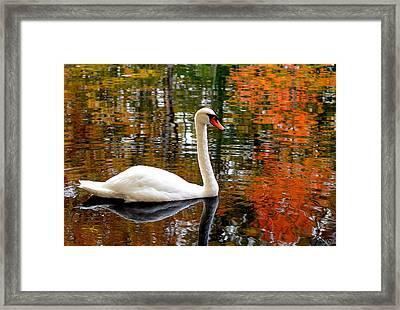 Autumn Swan Framed Print by Lourry Legarde