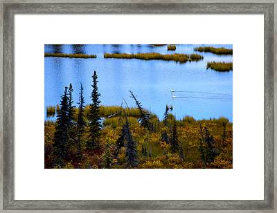 Autumn Swans Swimming Framed Print by Ron Day