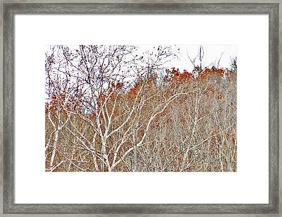 Framed Print featuring the photograph Autumn Sycamores by Bruce Patrick Smith