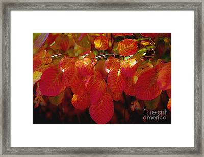 Autumn Framed Print by Sylvia  Niklasson