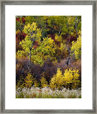 Autumn Tapestry Framed Print by Royce Howland