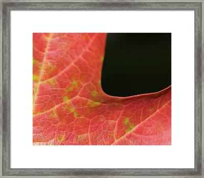 Framed Print featuring the photograph Autumn  by Tara Lynn
