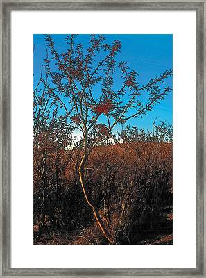 Autumn Framed Print by Terry Reynoldson
