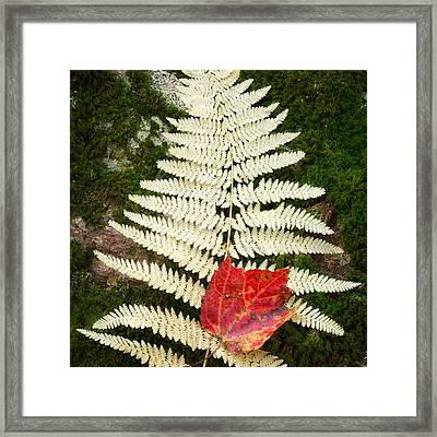 Autumn Textures Square Framed Print by Bill Wakeley