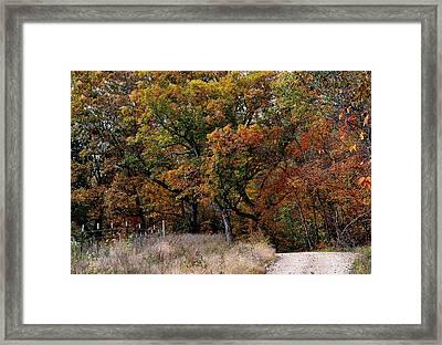 Autumn Trail 2 Framed Print