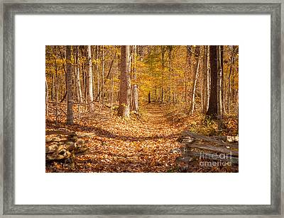 Autumn Trail Framed Print by Brian Jannsen