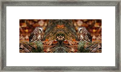 Autumn Treasure- Saw Whet In Forest Framed Print by Inspired Nature Photography Fine Art Photography