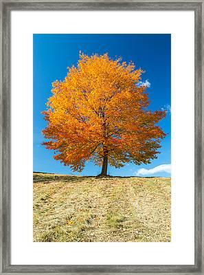 Autumn Tree - 1 Framed Print