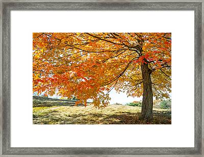 Autumn Tree - 2 Framed Print