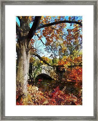 Autumn Tree By Small Stone Bridge Framed Print by Susan Savad