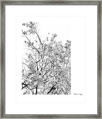 Autumn Tree In Black And White 2 Framed Print