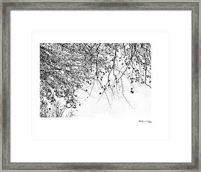 Autumn Tree In Black And White 3 Framed Print