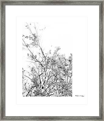 Autumn Tree In Black And White  Framed Print