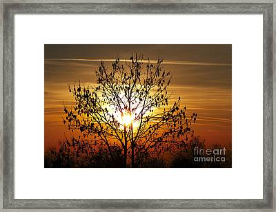 Autumn Tree In The Sunset Framed Print