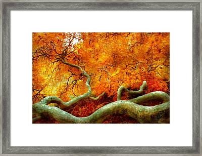 Autumn - Tree - Serpentine Framed Print by Mike Savad