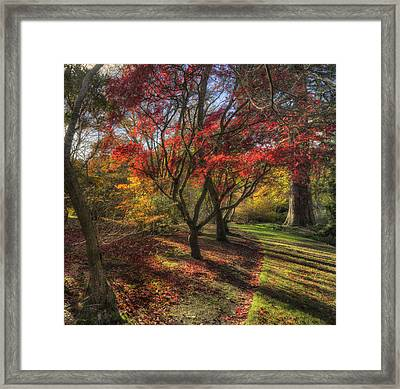 Autumn Tree Sunshine Framed Print by Ian Mitchell