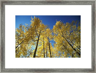 Autumn Tree Trunks In The Usa Framed Print by Panoramic Images