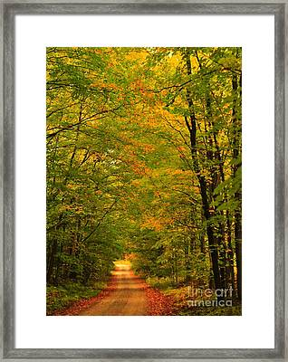 Autumn Tree Tunnel Framed Print by Terri Gostola