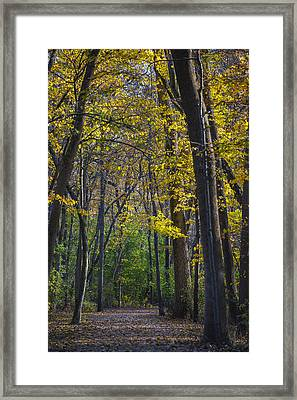 Autumn Trees Alley Framed Print by Sebastian Musial