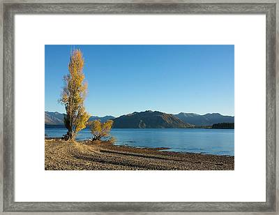 Framed Print featuring the photograph Autumn Trees At Lake Wanaka by Stuart Litoff