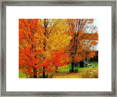 Framed Print featuring the photograph Autumn Trees By Barn by Rodney Lee Williams