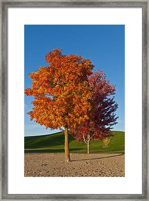 Autumn Trees Framed Print by Celso Bressan