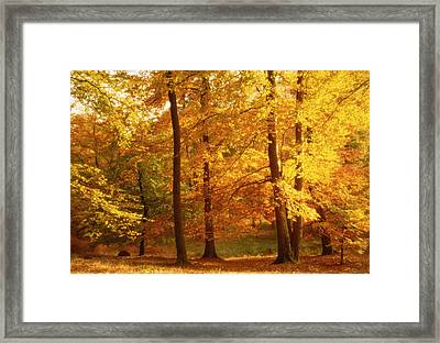 Autumn Trees Cumbria England Framed Print by Panoramic Images