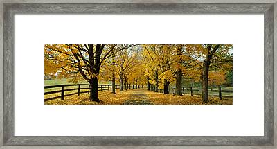 Autumn Trees Near Waynesboro Virginia Framed Print by Panoramic Images