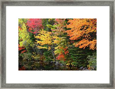 Autumn Trees, Sheepscot River, Palermo Framed Print by Michel Hersen