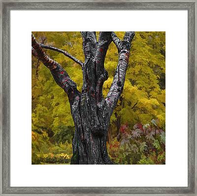 Autumn Trees3 Framed Print by Vladimir Kholostykh