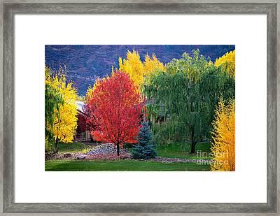 Autumn Trio Framed Print