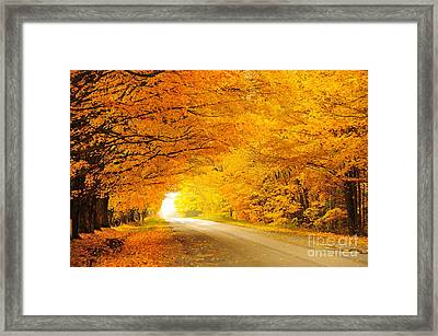 Autumn Tunnel Of Gold 8 Framed Print by Terri Gostola
