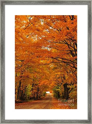 Autumn Tunnel Of Trees 30 Framed Print