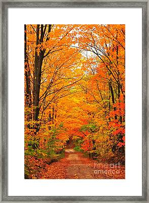 Autumn Tunnel Of Trees Framed Print by Terri Gostola