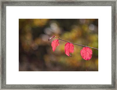 Framed Print featuring the photograph Autumn Twig With Red Leaves by Jivko Nakev
