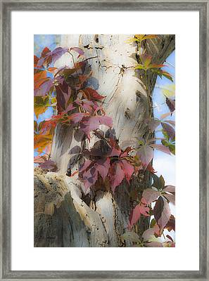 Autumn Veil Framed Print