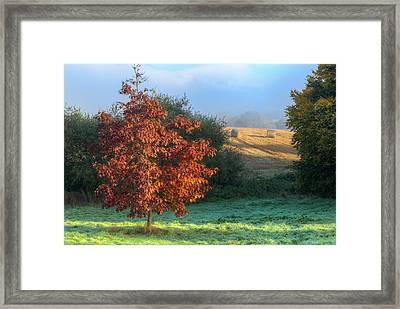 Autumn View Framed Print