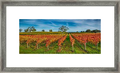 Autumn Vineyard At Napa Valley Framed Print by Panoramic Images
