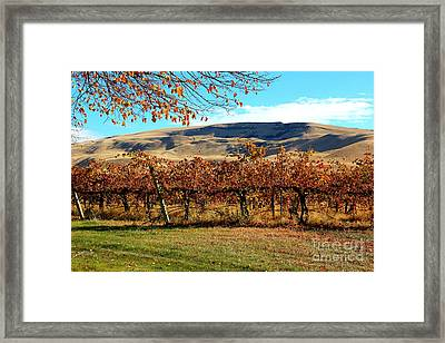 Autumn Vineyard In The Valley Framed Print by Carol Groenen