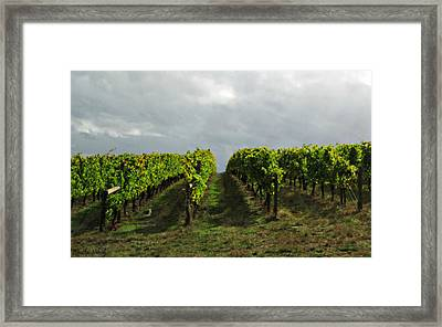 Framed Print featuring the photograph Autumn Vineyard by Mindy Bench