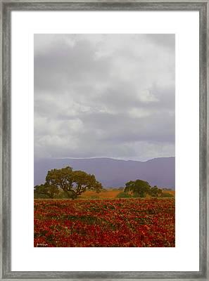 Autumn Vineyard Santa Ynez California Framed Print by Barbara Snyder