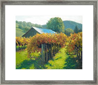 Autumn Vineyards Framed Print